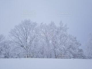 自然,風景,空,冬,雪,屋外,霧,樹木,霜,冷たい,凍結,冷凍