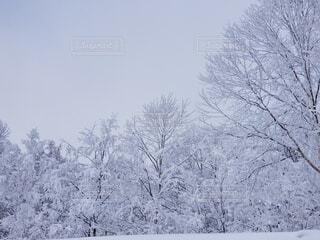 自然,空,冬,雪,屋外,樹木,霜,冷たい