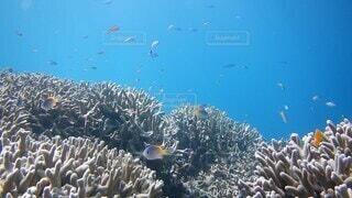 自然,動物,魚,水族館,水面,ダイビング,コーラル,スキューバ ダイビング,海洋無脊椎動物