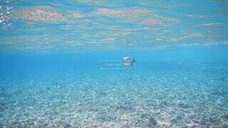 自然,海,動物,魚,屋外,水面,泳ぐ,水中,海底,海洋生物学
