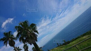 自然,風景,空,屋外,雲,水面,海岸,草,ヤシの木,眺め