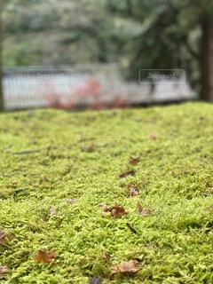 屋外,草,草木