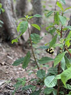 綺麗な蝶の写真・画像素材[4500335]