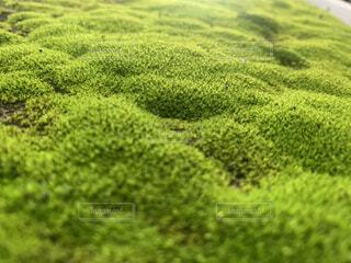 自然,緑,景色,草,コケ,苔,道端,クローズ アップ