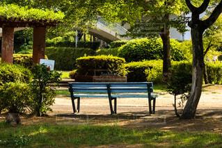 公園,屋外,ベンチ,木漏れ日,草,樹木,新緑,白昼夢,昼下り