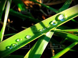 自然,緑,景色,雫,ドロップ,落ち着く,草木,液滴