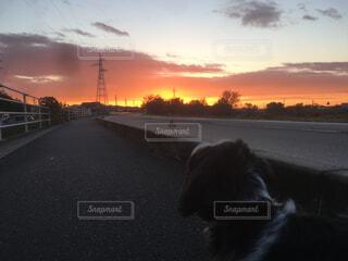 犬,空,夕日,動物,屋外,太陽,雲,夕焼け,夕暮れ,道路