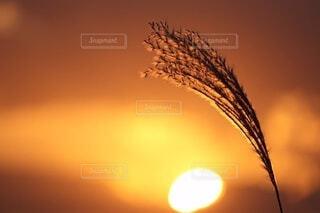 日没のクローズアップの写真・画像素材[4660141]