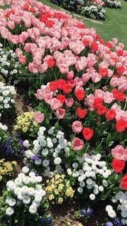 公園,花,ピンク,緑,赤,白,黄色,バラ,チューリップ,いっぱい,広場,たくさん,雰囲気,草木,日中,ガーデン,ブルーム,配置,フローラ