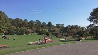 風景,空,公園,屋外,緑,綺麗,青,草,樹木,新緑,雰囲気,遊び場,草木,日中