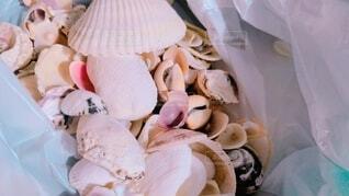 海,貝殻,袋,貝,集め