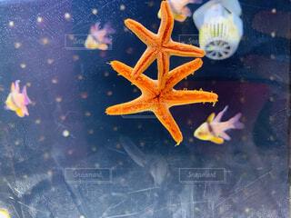 動物,水族館,海洋無脊椎動物
