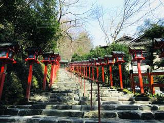空,屋外,京都,神社,階段,樹木,草木