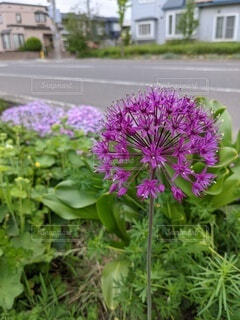 花,草木,ガーデン,フローラ