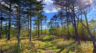 自然,風景,空,森林,木,屋外,山,草,樹木,草木,亜熱帯針葉樹林