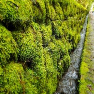 自然,風景,草木,藻類,緑藻