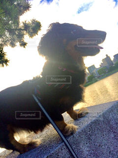 犬,動物,太陽,座る