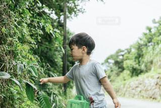 自然,夏,沖縄,虫取り,虫,かご,昆虫,男の子,カゴ,4歳,昆虫探し,自然の遊び方,虫取りかご