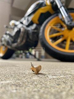 動物,バイク,地面,梅雨,カタツムリ