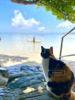 猫,海,夏,リラックス,旅行,思い出