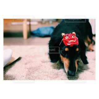 犬,動物,黒,景色,ミニチュアダックス,dog,ミニチュアダックスフンド,愛犬,ブラックタン,ダックスフンド