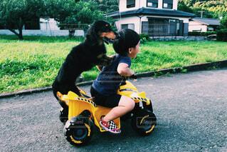 犬,風景,屋外,人物,人,幼児,少年,dog,若い,乗馬,ホイール,バギー