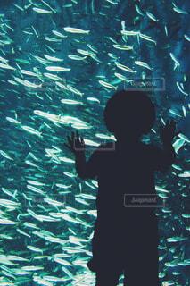 魚,水族館,水面,葉,泳ぐ,水中