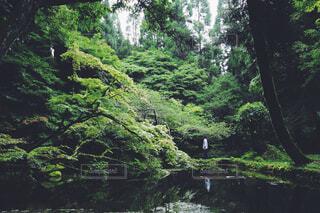 自然,森林,屋外,川,水面,樹木,ジャングル