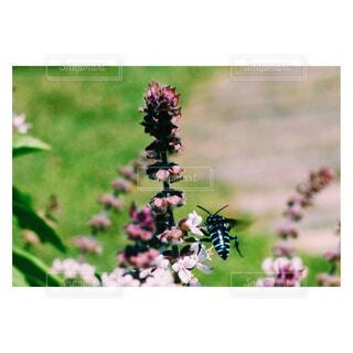 花,ラベンダー,蜂,bee,草木,ブルービー