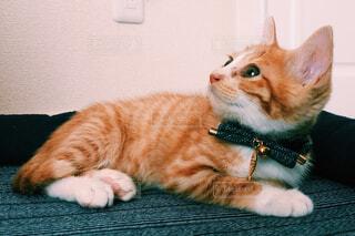 猫,動物,屋内,緑,白,かわいい,景色,オレンジ,子猫,ネコ科