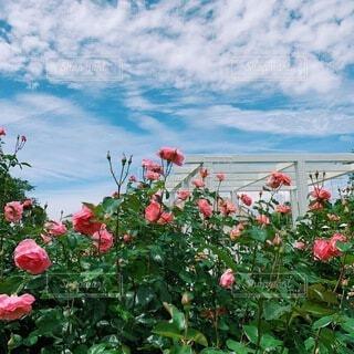 花園のクローズアップの写真・画像素材[4635635]