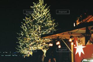 夜,屋外,樹木,イルミネーション,クリスマス,明るい,クリスマスマーケット,クリスマス ツリー