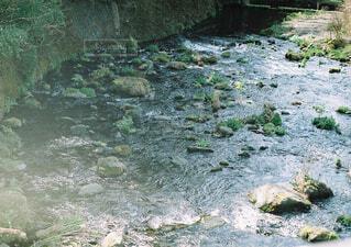 自然,屋外,綺麗,晴れ,川,水面,田舎,岩,癒し,落ち着く,運河,フィルムカメラ,草木,クマ,クリーク,ストリーム,藻類