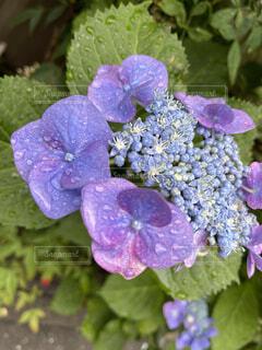 花,屋外,緑,紫,草木,フローラ