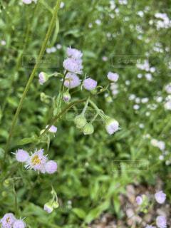 花,樹木,奈良県,草木,フローラ