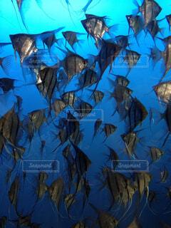 海,魚,水族館