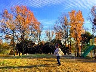 秋の公園の写真・画像素材[4509163]