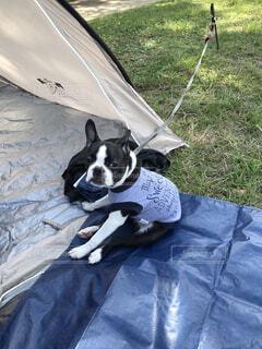 レジャーシートでひと休みする犬の写真・画像素材[4584286]