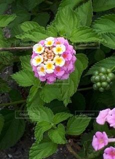 道端に咲いてたかわいい花の写真・画像素材[4551860]