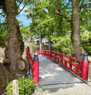 岡崎城の写真・画像素材[4521234]