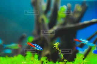 水の中のパレットの写真・画像素材[4514419]