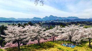 屋外,青空,青,花見,日本,朝,文化,明るい,群馬,山並み,安中