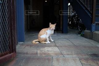 建物の上に座っている猫の写真・画像素材[4676924]