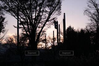公園の草木のシルエットの写真・画像素材[4552324]