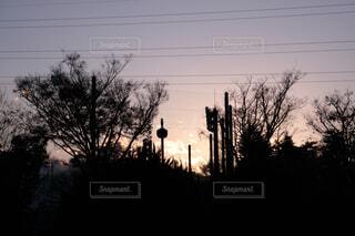 公園の草木のシルエットの写真・画像素材[4552322]