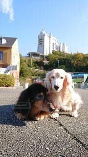 愛犬2匹とノイシュバンシュタイン城を模した建物の写真・画像素材[4557449]
