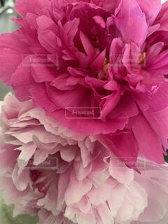 花のクローズアップの写真・画像素材[4528666]