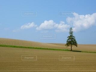 クリスマスツリーの木の写真・画像素材[4610317]