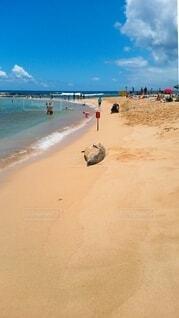 モンクアザラシのいるビーチの写真・画像素材[4640162]