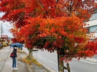 小雨降る紅葉の軽井沢女子旅の写真・画像素材[4645045]